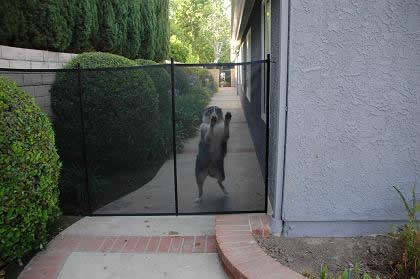 OUTDOOR DOG FENCES DOORS