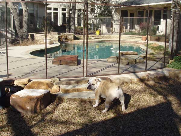 Fencing For Dogs