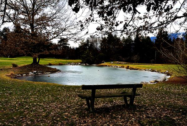 Fish Pond Pool Fence